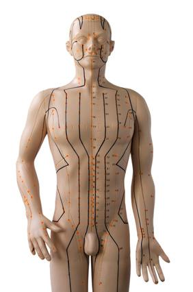 Akupunktur Modell (Freisteller)